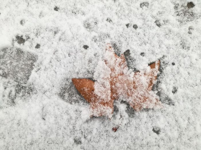 Fall Snow White Nature