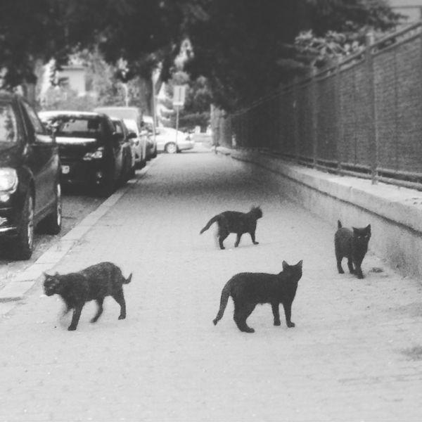 Blackandwhite Cat Streetphotography