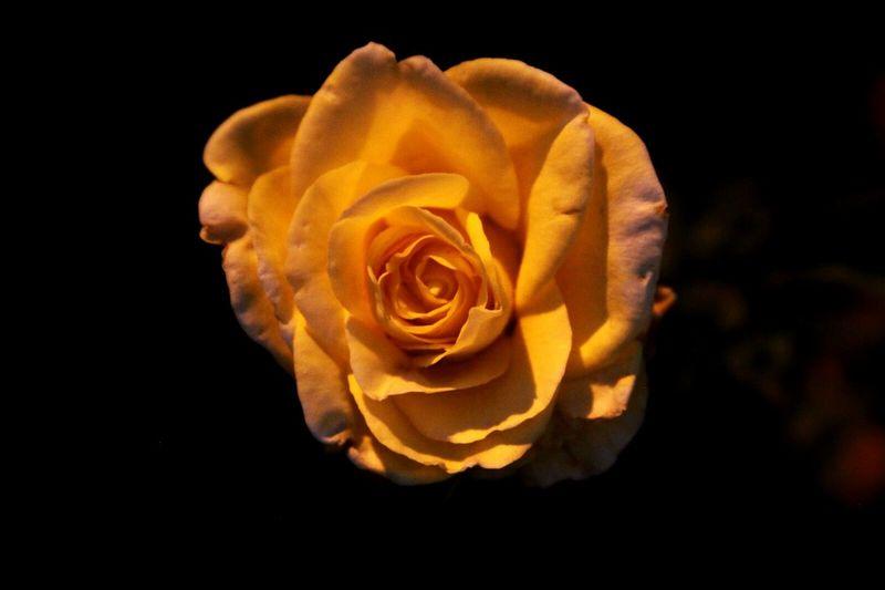 Rosé Eyeemphoto