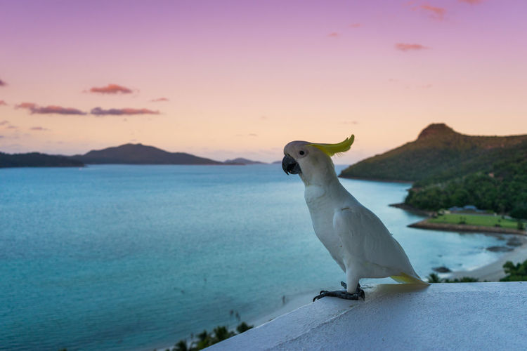 Seagull by sea against sky during sunset