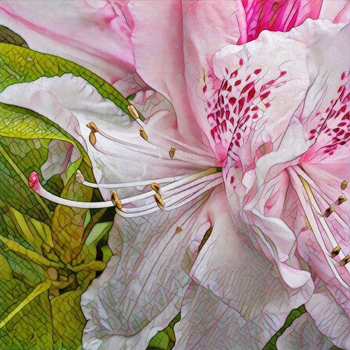 Colour Of Life Prisma Lys Flower