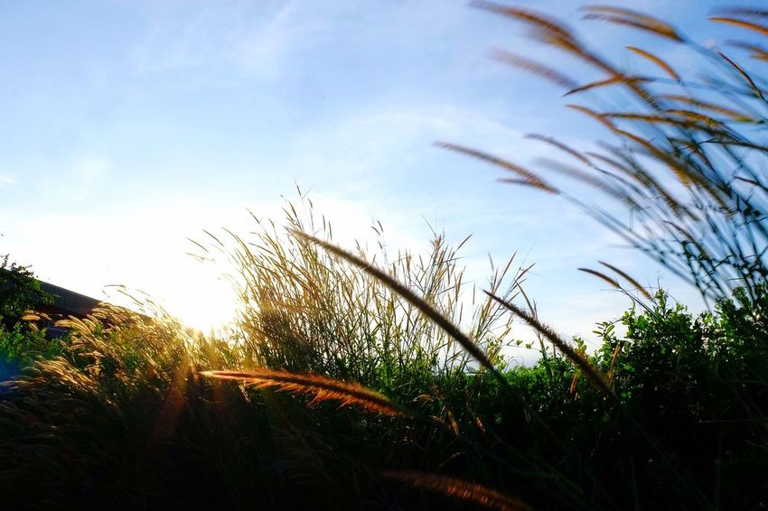 Growth Sky Nature Grass Plant Tranquility Day Close-up Low Angle View Outdoors Beauty In Nature No People