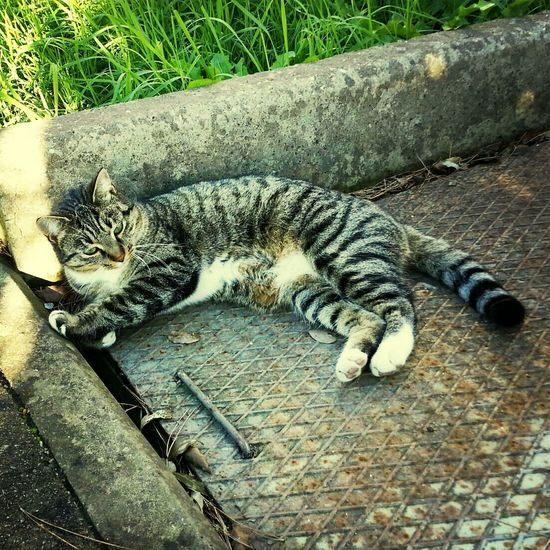 Cat Animals Posing in EyeEm Boost Filter