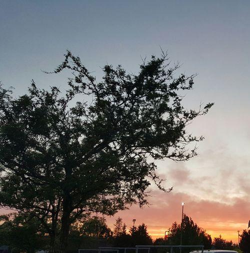 Orange Sunset and trees. Colour Of Life Taking Photos Urban Nightsky