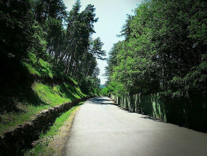 Ankara/turkey Ankaradayasam Manzara Dediğin  Mis Kokulu Tree Sky Green Color