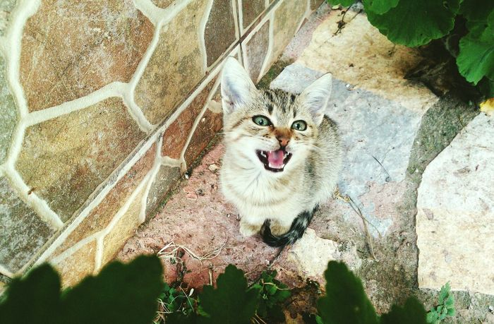 Cats Open Edit EyeEm Best Shots Cute Cats Little Kitten