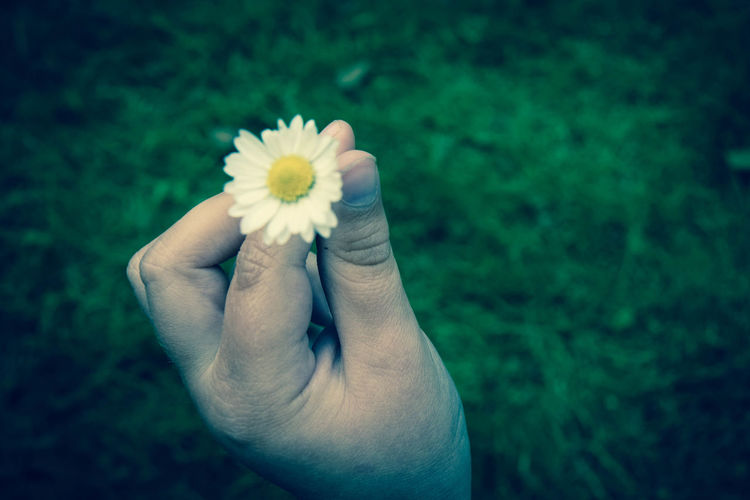 Cropped Hand Of Person Holding White Flower On Field