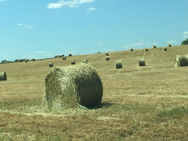 My Commute Nothing But Hay Fields