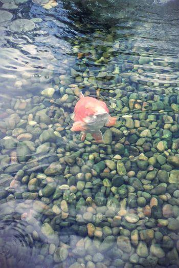 Small Fish Humility Rivers Consciousness Illumination Natural