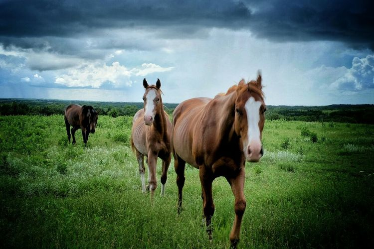 """""""The Fourth Horseman"""" Apocalypse Horses Millenium Time Is Now  Patti Smith Rural Scenes What Does Music Look Like To You? Color Photography EyeEm Best Shots From My Point Of View"""