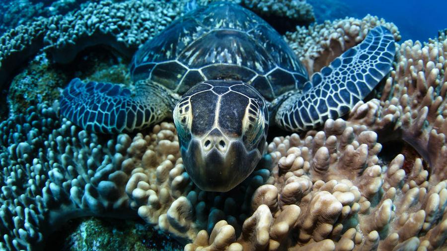 Sleep Turtle