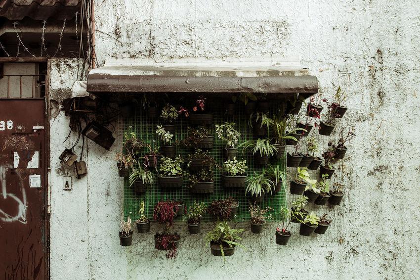 Alternative Architecture Building Exterior Built Structure Green Plants Grow No People Plant Urban Window Box