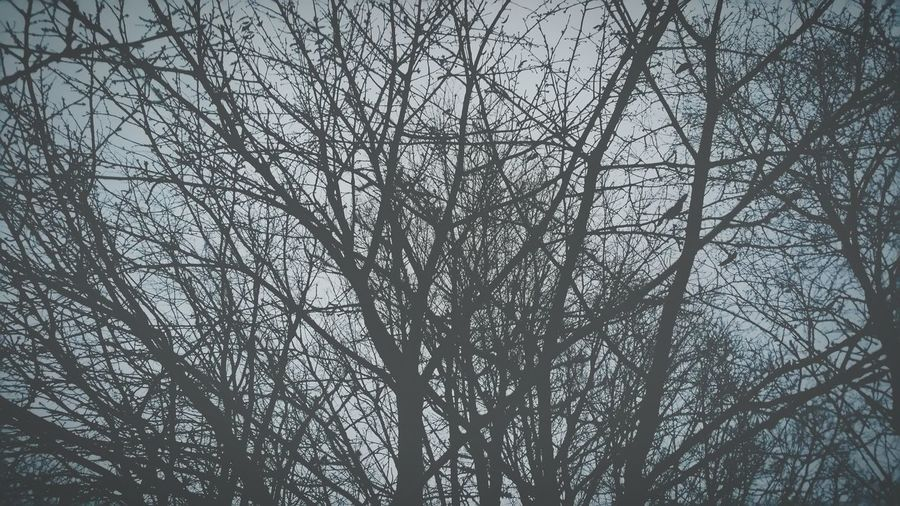 Trees Bare Trees Bare No Leaves Naked Trees No Foliage Winter Skeletal Sky Cold Dark Forest Woods