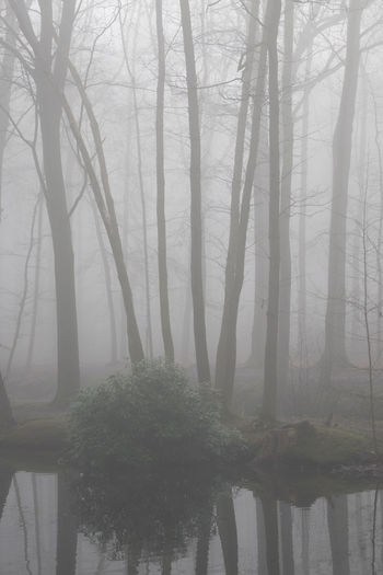 Abandoned Places Abstract Photography Abstract Nature Abstract Abstract Art Bare Tree Beauty In Nature Branch Day Fog Forest Growth Hazy  Landscape Mist Nature No People Outdoors Reflection Scenics Tranquil Scene Tranquility Tree Water