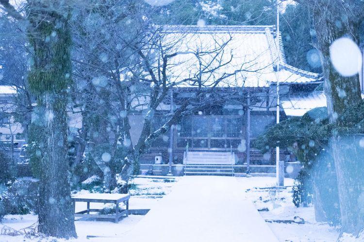 Winter Snow Japan
