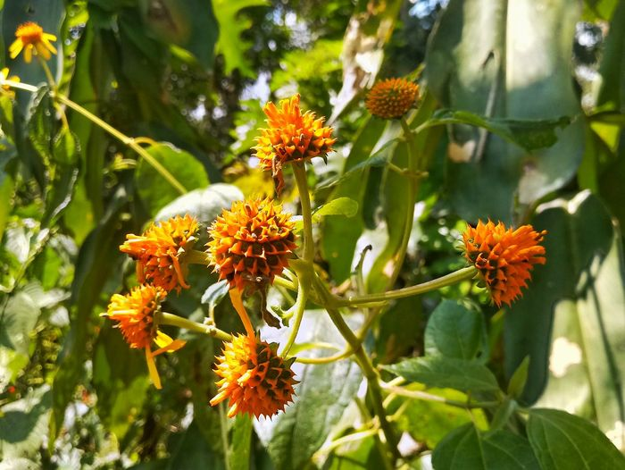 Wild flower of the jungle Flower Nature Green Color Beauty In Nature No People Botanical Garden Outdoors