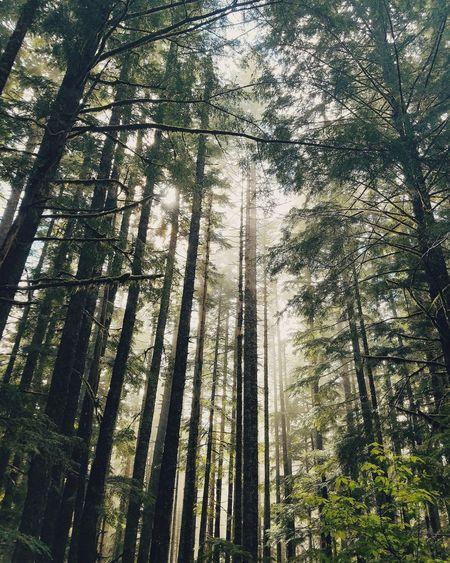 Mother Nature Artofvisuals Beautiful Washington PNW Pacificnorthwest Oregon Upperleftusa Forest Trees