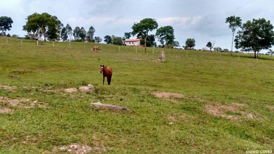 Série: um olhar sobre as paisagens - Egua no pasto - Matogrosso Cavalos Cavalo Horse Brasil ♥