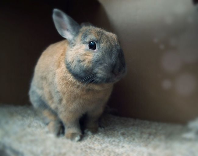Showcase: February Animal Photography Pet Rabbit Domestic Rabbit Reflective Bokeh Cute Animals Rabbits Bunny  Selective Focus Furbabies Cute Pets Easter Ready