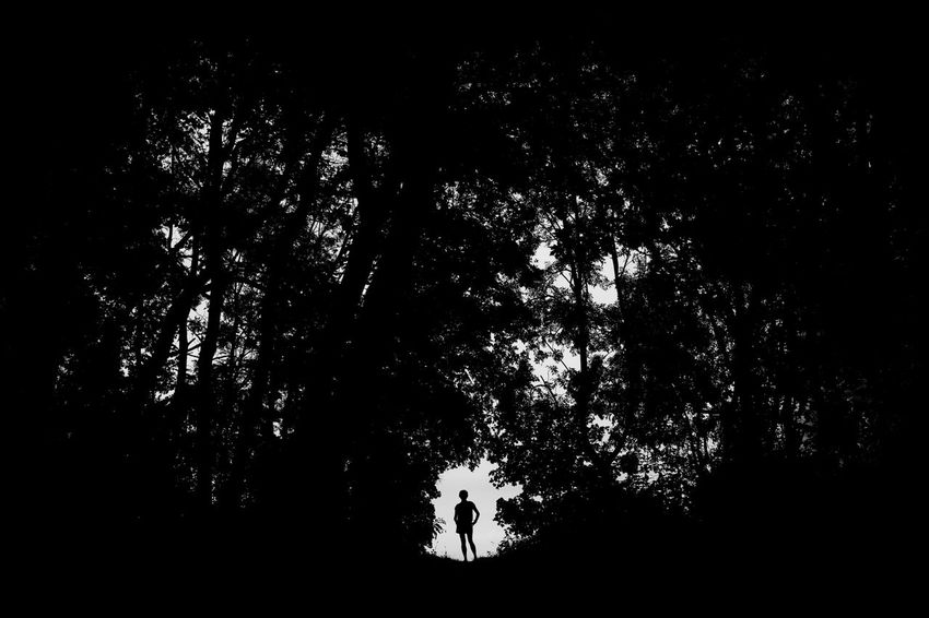 Woman silhouette in the woods B&w Backlight Black Countryside Dark Forest Light Low-key Minimal Minimalism Nature Non-urban Outdoor Park Shadow Silhouette Tree Treetop Woman Wood WoodLand Female Girl