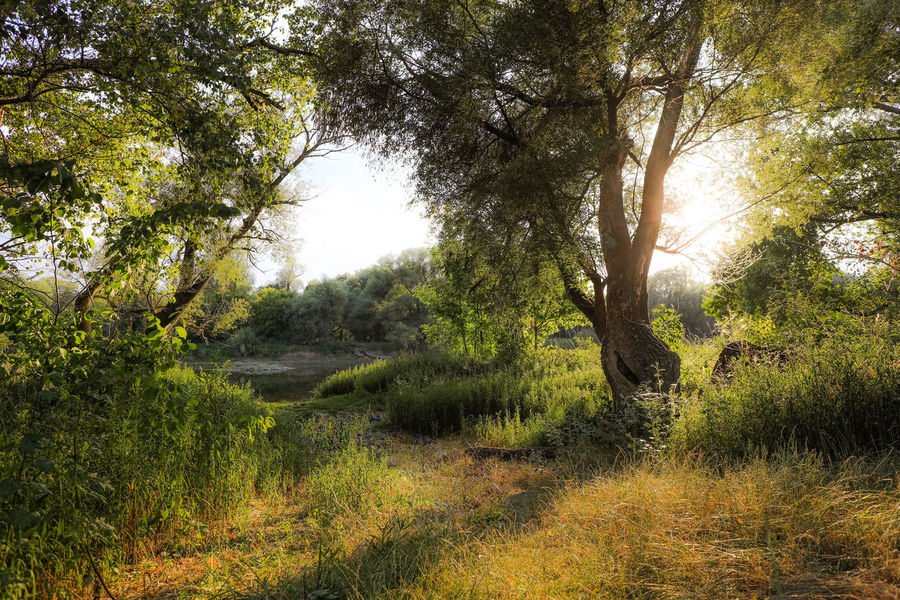 Forest Green Nature Nature Photography River Sunset Sunset And Trees Trees