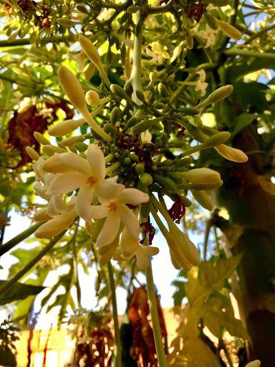 🌸 Flowers In