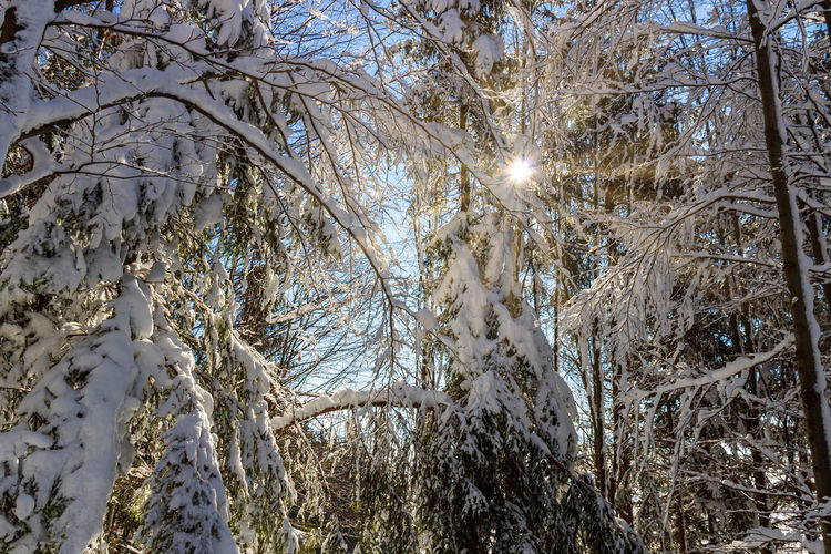 Low angle view of frozen trees during winter