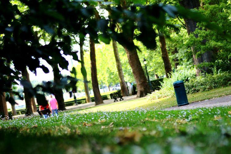 Bruselas Parque