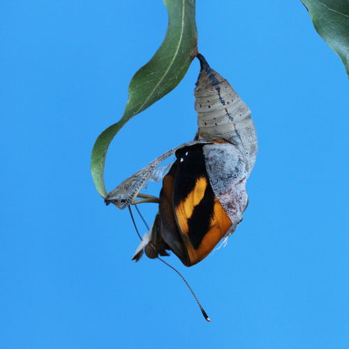 Beauty In Nature Blue Born Butterfly - Insect Day Insect Low Angle View Nature A New Beginning