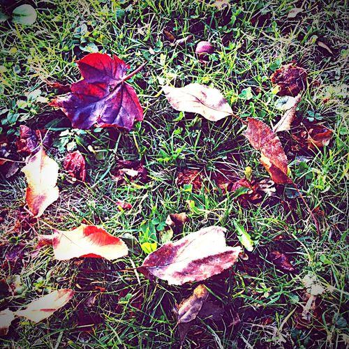 Circle of leaves. Happyfall