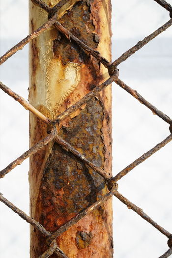 Rust Animal