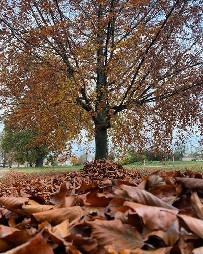 Sunlight falling on dry leaves in park