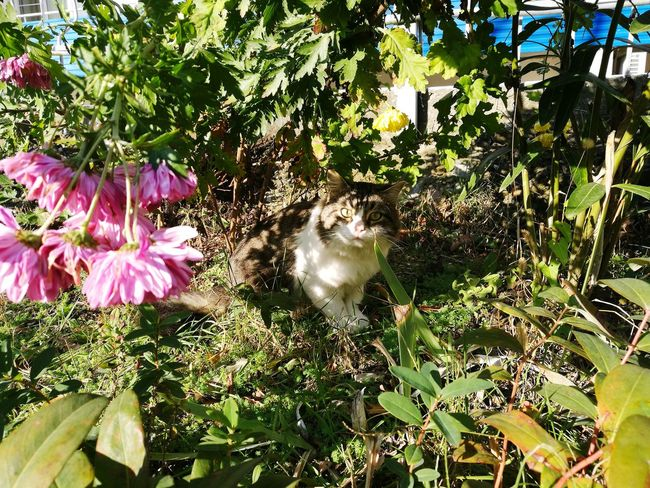 Cat Flower Nature Growth Beauty In Nature Outdoors Fragility Day Sunlight