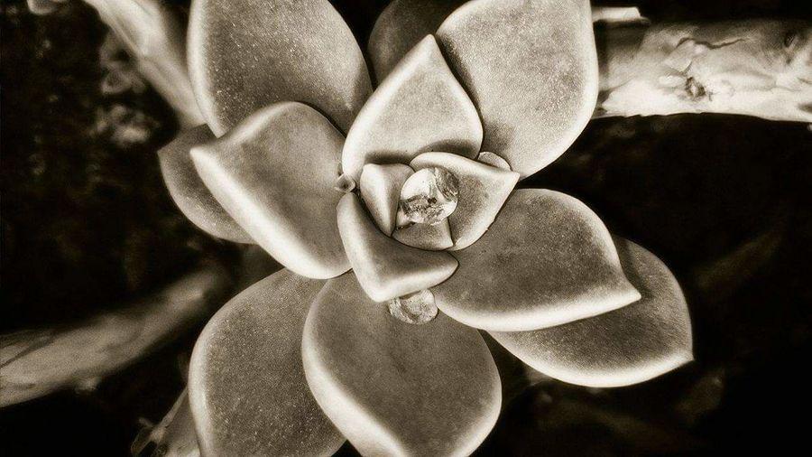 Flower#garden#na