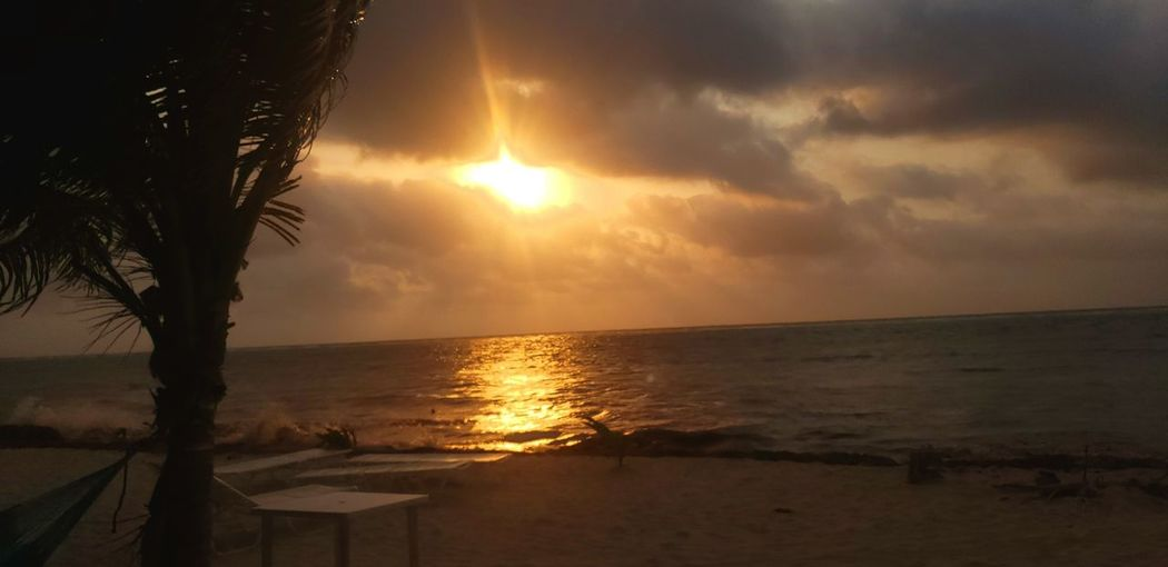 The Traveler - 2019 EyeEm Awards Water Tree Sea Sunset Beach Backgrounds Horizon Beauty Sunlight Sun The Great Outdoors - 2019 EyeEm Awards
