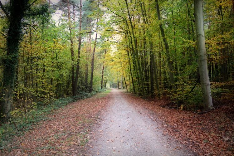 Tree Forest The Way Forward Land Autumn Tree Trunk Tranquility Tranquil Scene Change Scenics - Nature Calmness Relaxing Moments Relaxing Time Beautiful Nature Nature Photography Nature_collection Autumn colors Autumn autumn mood Naturelovers WoodLand Nature