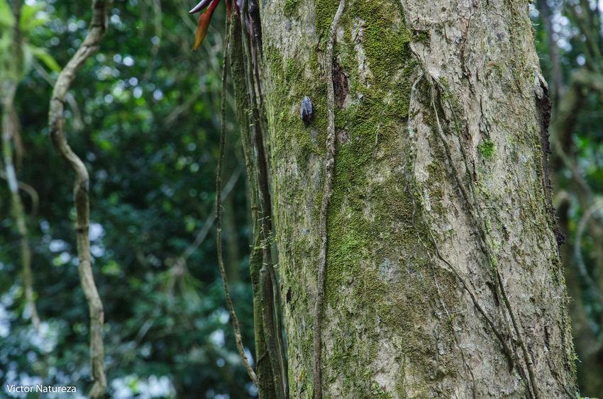 Nature Green Color Day Beauty In Nature Animal Themes Textura Brazil Paraty Travel Destinations Brasil Fotografiaautoral Artefotografia Photoart Victornatureza Vitaonatureza Documentaryphotography Fotodocumental Documentary Beauty In Nature Nature Animal Wildlife Green Color One Animal