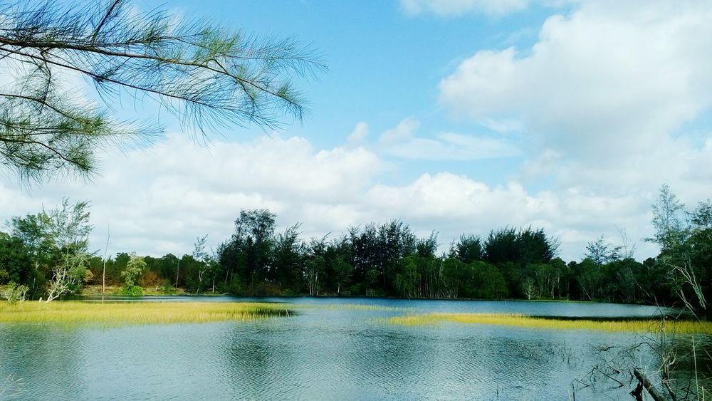Lake View Green Nature Scenery Shots Belitung Natural Beauty