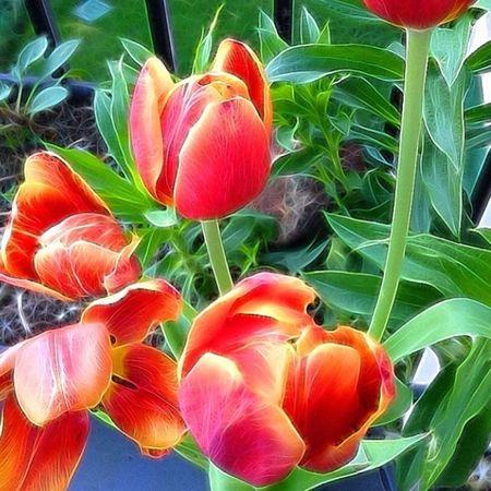 Enjoying Life Flowers Nature Collection TangledFX