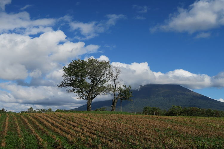 autumn niseko hokkaido japan 2018 In One Photograph Architecture Tree Grass Mountain Hokkaido Cloud And Sky Niseko Yotei Moments Of Happiness EyeEmNewHere Yotei Mt., Hokkaido Yotei Mt. Holiday Moments A New Perspective On Life Capture Tomorrow It's About The Journey Sky Cloud - Sky Landscape Land Field Environment Tranquil Scene Plant Beauty In Nature Scenics - Nature Tranquility Growth Rural Scene Nature Agriculture Day No People Non-urban Scene Farm Outdoors Plantation