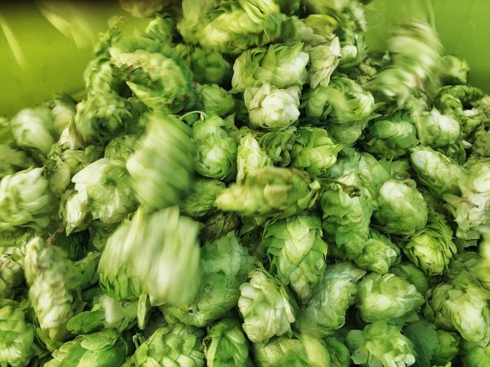 Freshness Food And Drink Abundance Large Group Of Objects Food For Sale Healthy Eating Green Color Artichoke Selective Focus Vegetable Repetition Close-up Consumerism Retail  Organic Full Frame Retail Display Bunch Choice Hops Beer Brewing Brewery Idaho