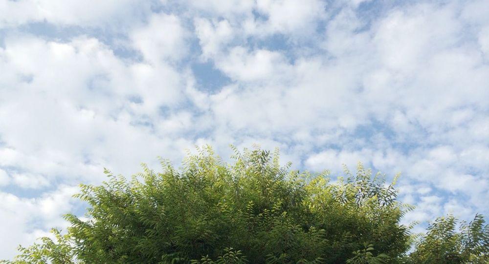 Blue Sky Relaxing Trees Green Blue