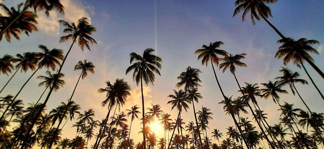 sunset Vacation