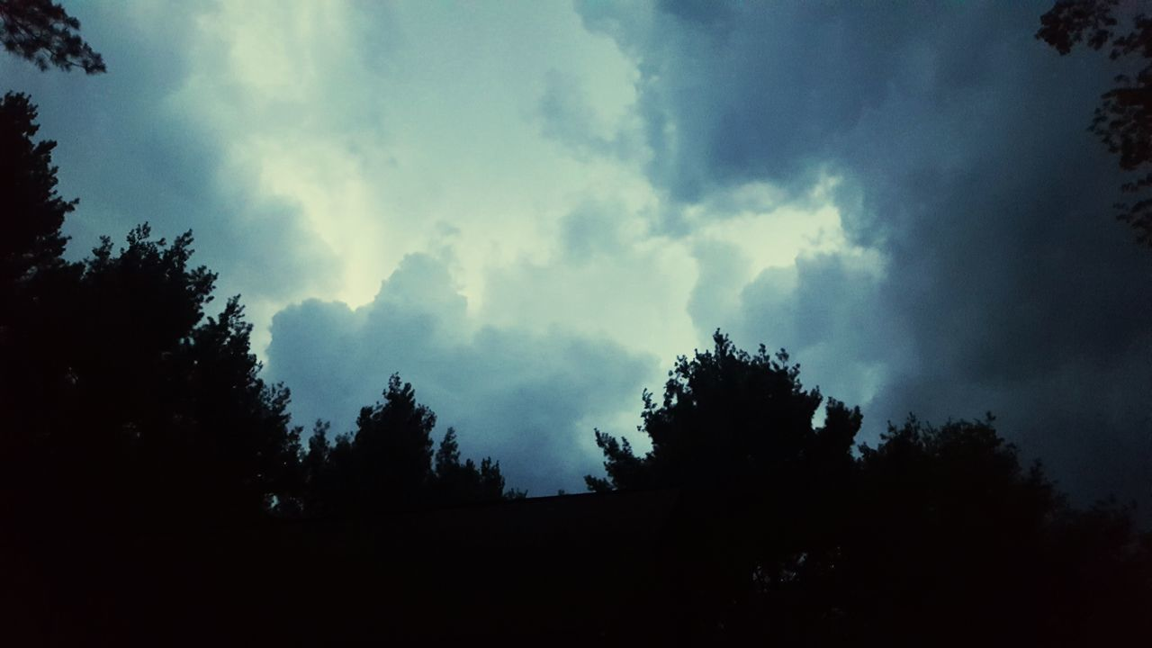 tree, sky, nature, beauty in nature, low angle view, silhouette, cloud - sky, no people, tranquility, scenics, outdoors, day