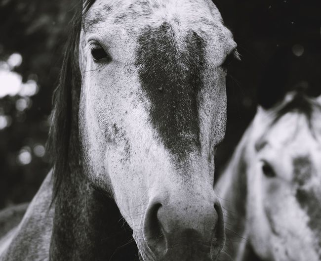Close-up portrait of horse on field