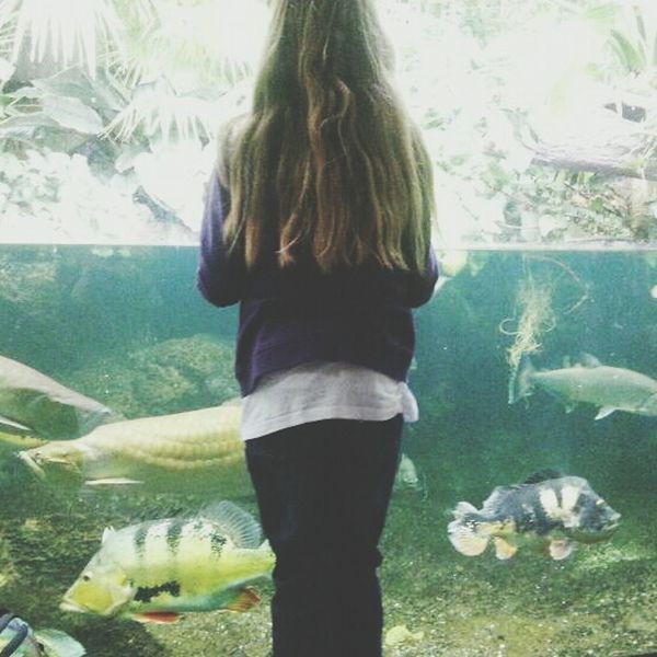 my sister Aquarium Fishes Sister Family