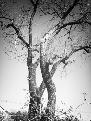dead tree. winter is here Hugging A Tree Streetphotography Black And White Blackandwhite Photography