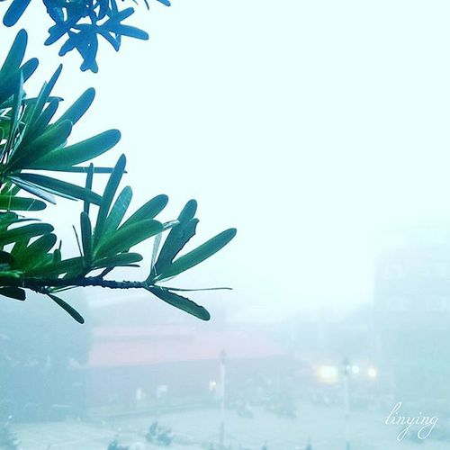 早晨六點大霧 早晨 霧 林口 Morning Fog Linkou Htcnewone