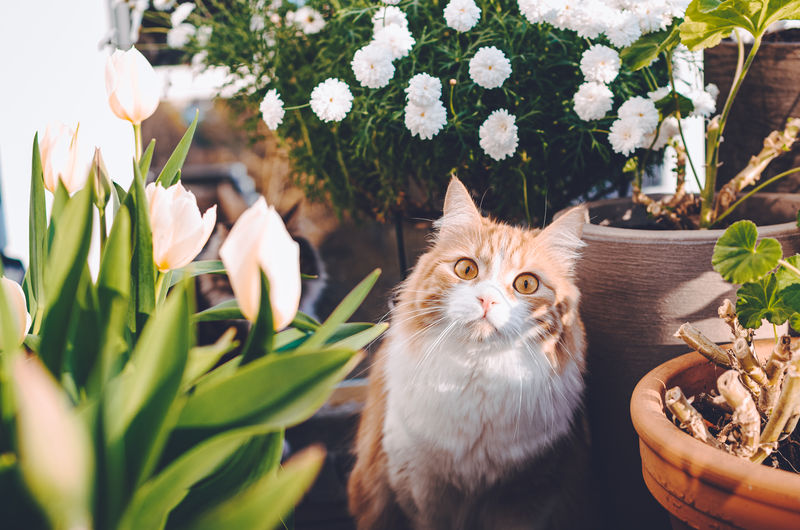 Adorable and funny ginger pussycat surrounded with summer flowers looking curiously at a camera.