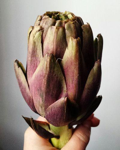 Artichokes, a beautiful flower...